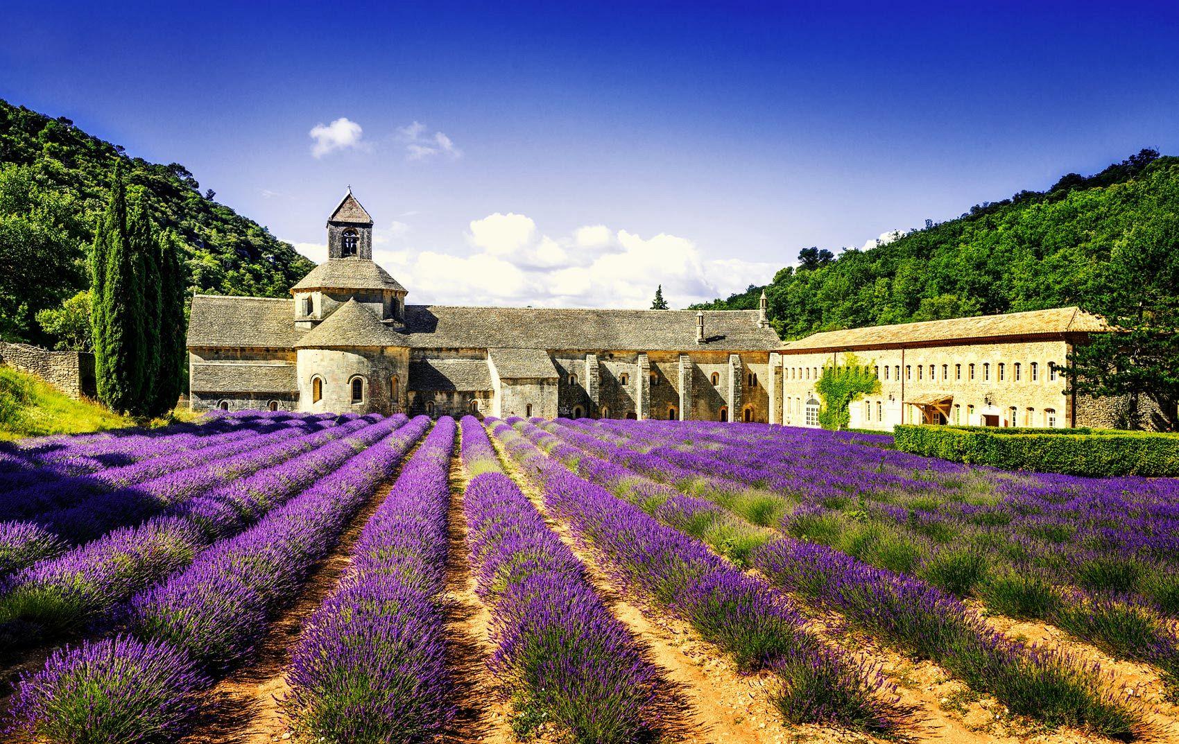 Avignon Franta Lavanda